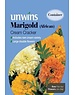 Unwins Marigold (African) - Cream Cracker