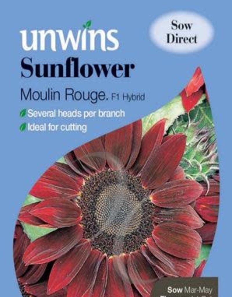 Unwins Sunflower - Moulin Rouge