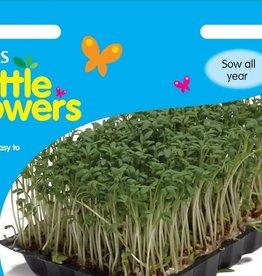 Unwins Cress Kit - Little Growers