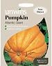 Unwins Pumpkin - Atlantic Giant