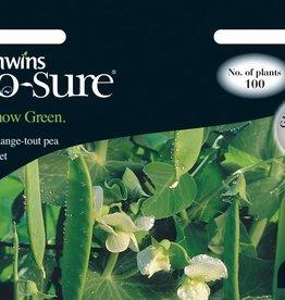 Unwins Pea - Snow Green