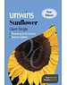 Unwins Sunflower - Giant Single