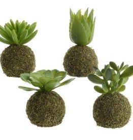 KaemingkS9 Moss Ball Succulent