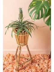 Cane plant pot stand
