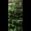 Real Tree