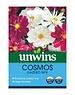 Unwins Cosmos - Gazebo Mix