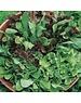 Unwins Lettuce Cut and Come Again - Organic