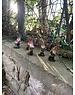 kaemingkS7 Fairy Garden Mini Gnomes (price each) assorted
