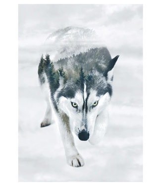 Faunascapes Faunascapes Poster Siberisch Husky  (diverse maten)