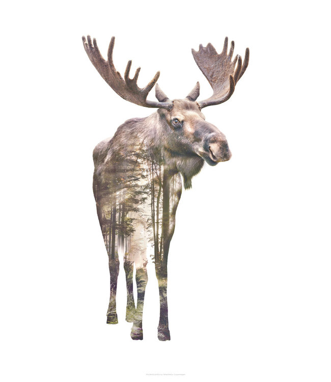 Faunascapes Faunascapes Poster Moose (different sizes)