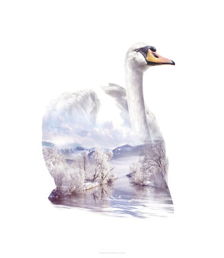 Faunascapes Faunascapes Poster Swan (different sizes)