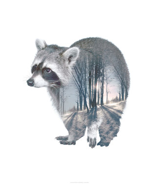 Faunascapes Faunascapes Poster Racoon 50 x 70cm