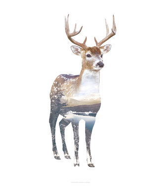 Faunascapes Faunascapes Poster Deer A3