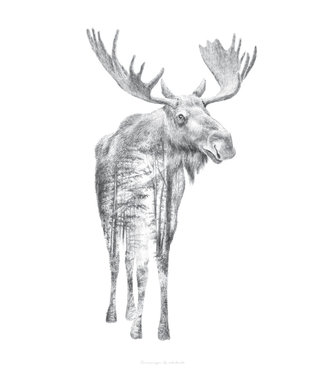 Faunascapes Faunascapes Poster Pencil Drawing Moose (different sizes)