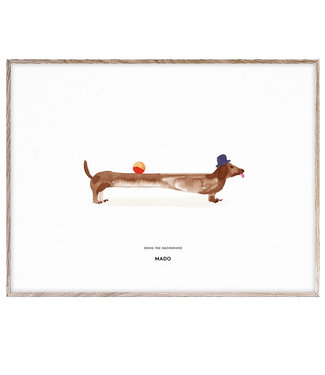 Paper Collective MADO Poster Doug the Dachshund 30 x 40 cm