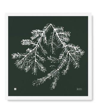 Teemu Järvi  Teemu Järvi Poster Spruce Branch 50 x 50 cm