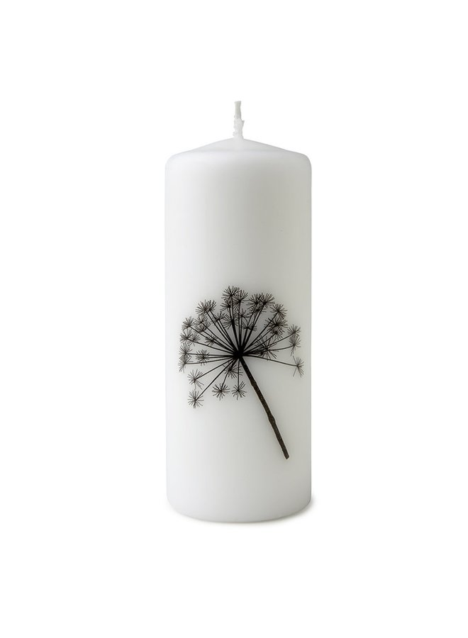 Candle with hogweed