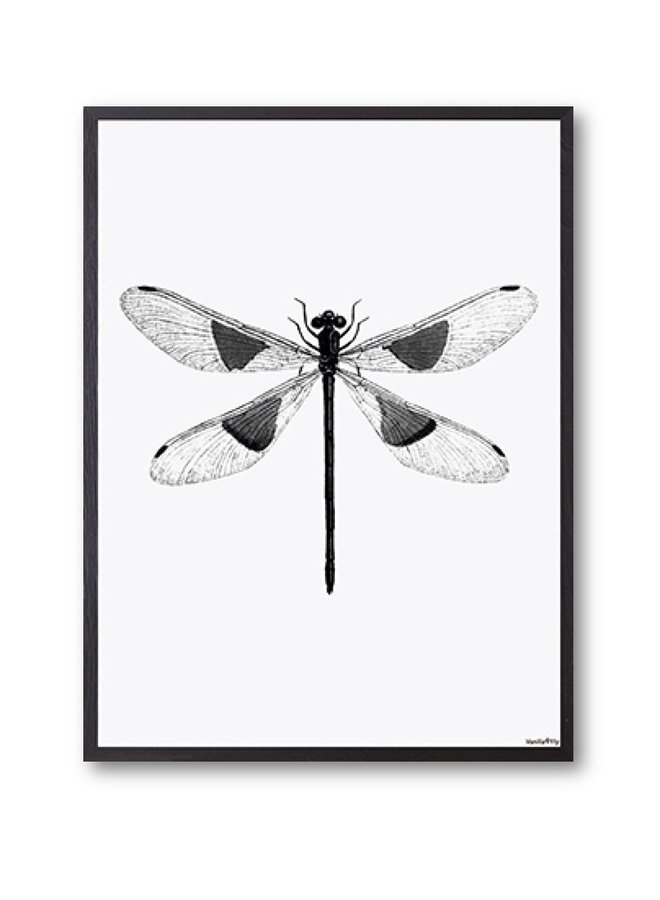 Poster Spotted Dragonfly 30x40cm