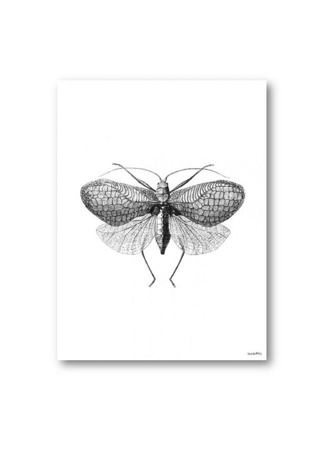 Poster Moth 20x25cm