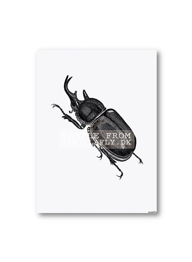Poster Horn beetle 20x25cm