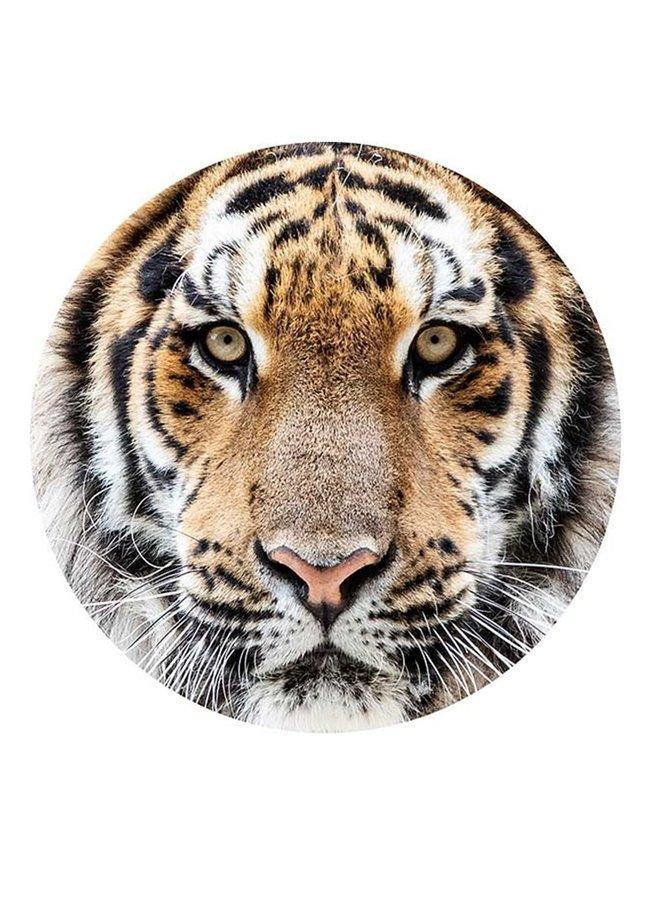 Wall Circle Tiger close-up