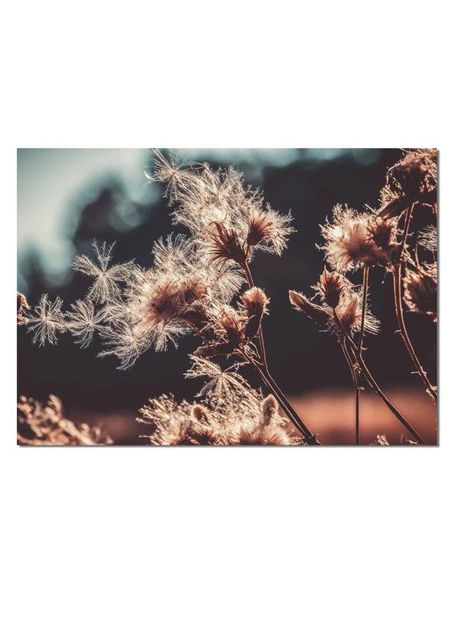 Muurrechthoek droogbloemen