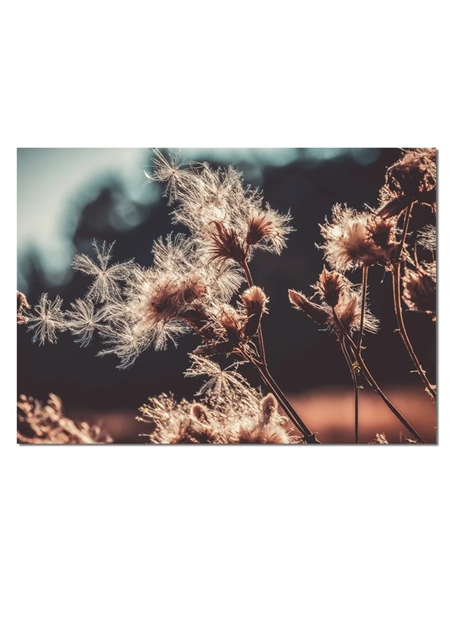 Wall rectangle dried flowers