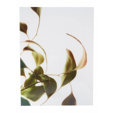 Moebe Moebe floating leaves A3 08 print