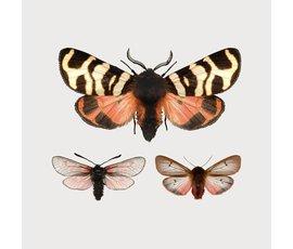 Liljebergs Liljebergs macro mini print vlinder