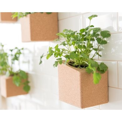 Life in a bag Life in a bag herb garden coriander and parsley