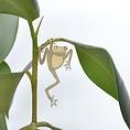 Another Studio Plant bug frog