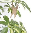 Another Studio Plant bug orangutan