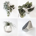 Groovy Magnets Groovy Magnets magnetic wallplanter white