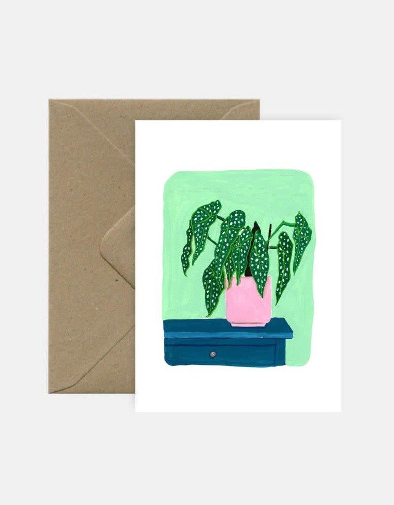 PINK CLOUD STUDIO PINK MISC BEGONIA MACULATA PLANT