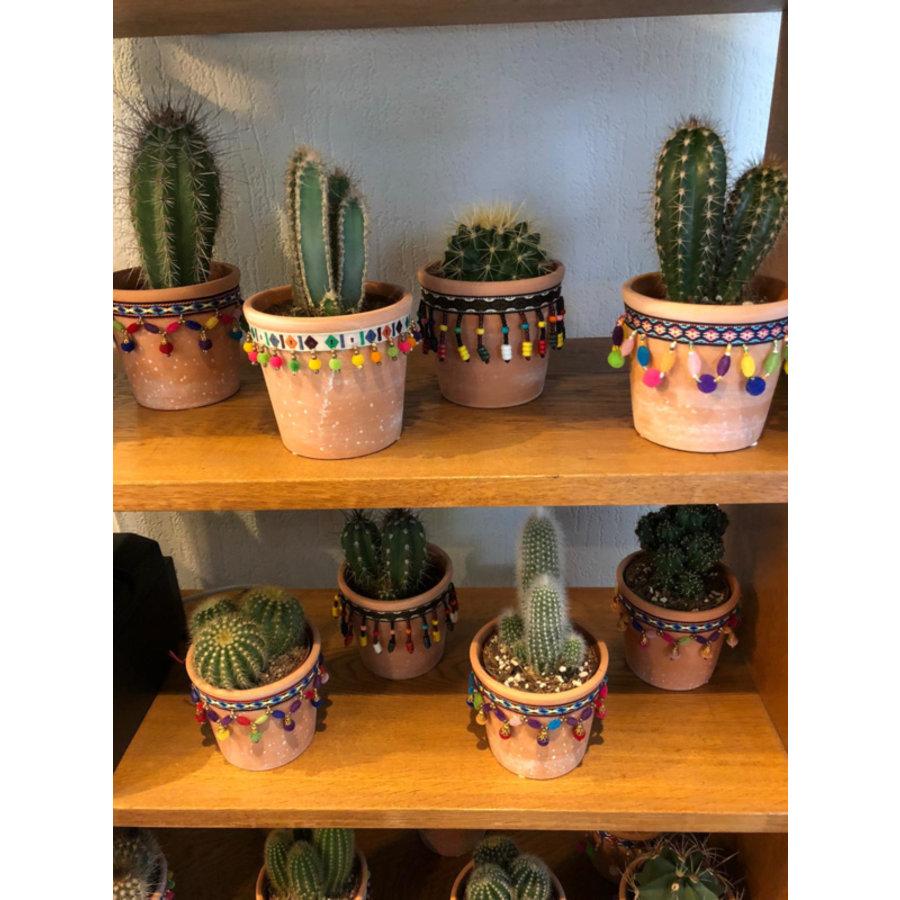 Cactus S-1