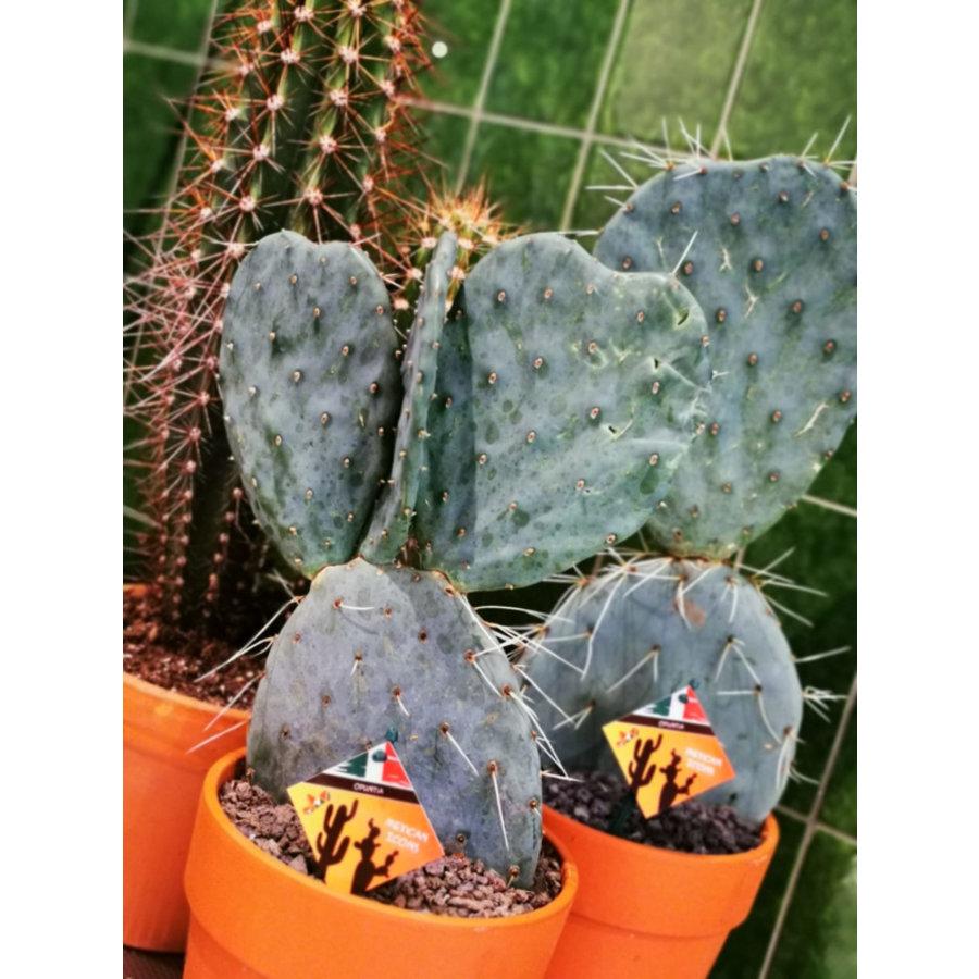 Cactus XL-1