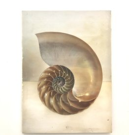 AJvB Encaustic artwork of nautilus shell