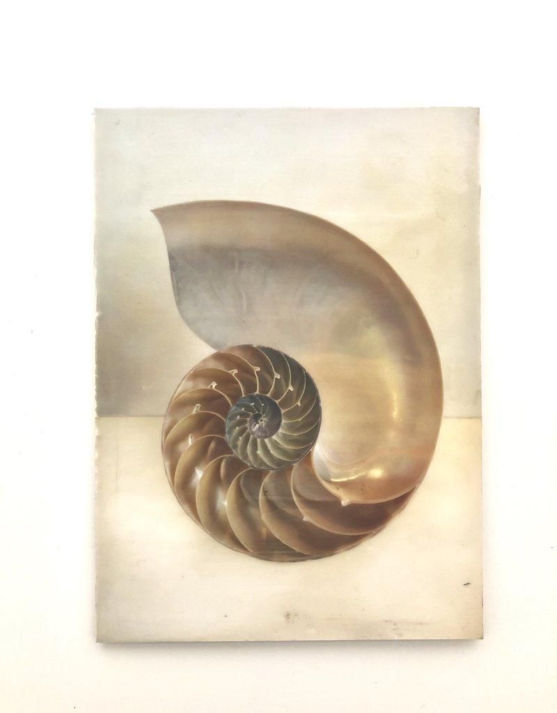 AJvB Encaustic artwork of nautilus shell