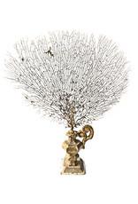 AJvB Sea fan mounted on 18th century gilt ornament