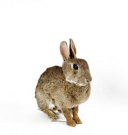Taxidermy rabbit - sitting