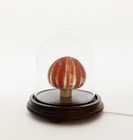 Sea urchin lamp under glass dome