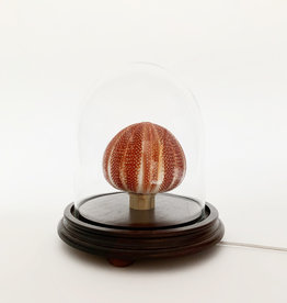 Vintage Sea urchin lamp under glass dome