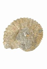 Ammonite 15 x 13 x 5 cm