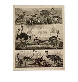 Vintage animal print