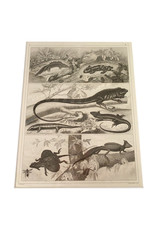 Vintage Henry Winkles animal print - chameleon, flying dragon