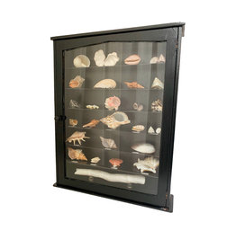 Vintage Cabinet with shell collection