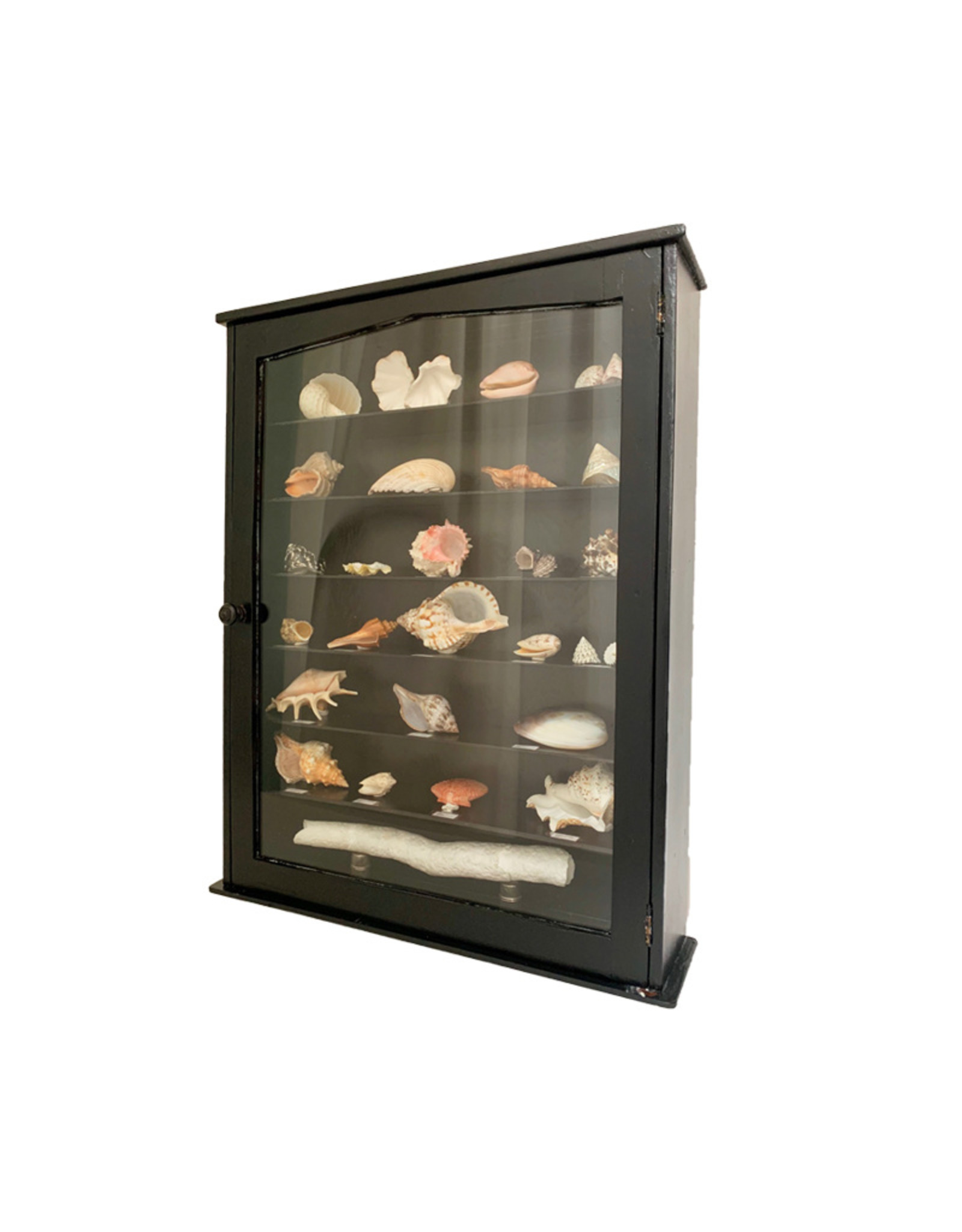 Vintage black wooden  cabinet with shell collection