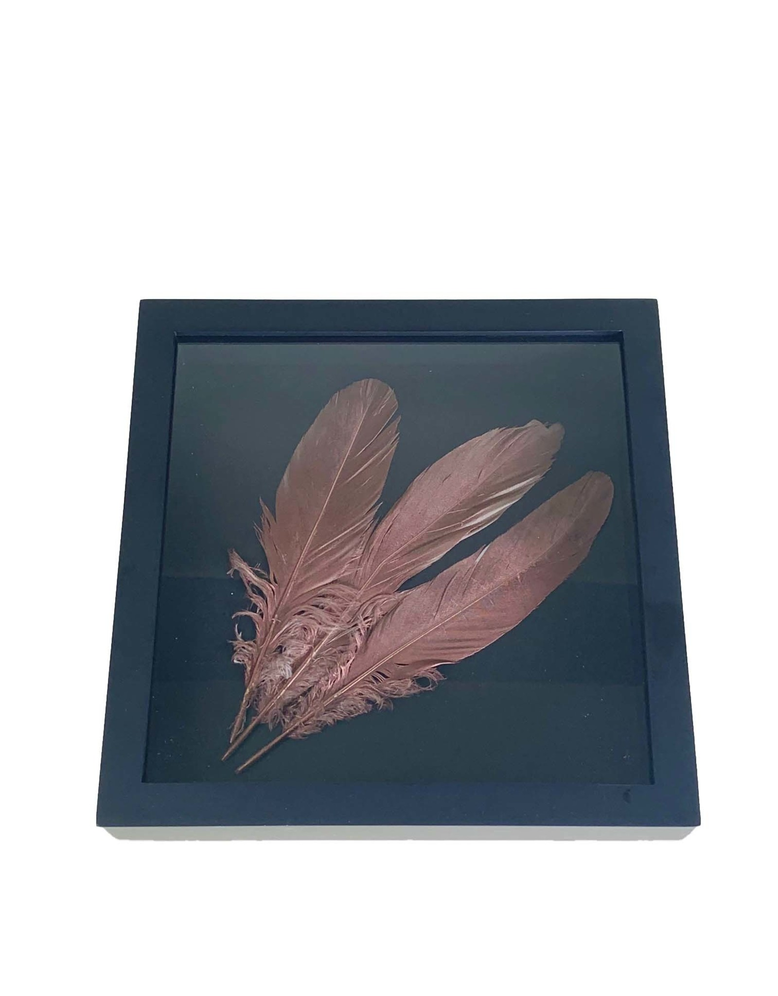 Copper colored feathers in black frame