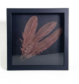 Framed copper colored feathers