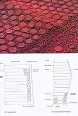 Eigentijdse Quilts; kleur, structuur en vervorming / C. June Barnes